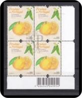 Portugal 2019 Frutas Algarve Laranja Laranjeira Orange Naranja Tree Flora Fruits Flore Arancione Oranje оранжевый 橙 オレンジ - Obst & Früchte