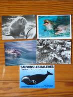 Lot De 5 Cartes (2 CPM 2 CPSM 1 Auto Collant) Sur Mammifères Marins : Morse-dauphin-baleine-phoque - Animali