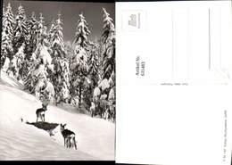 631483,Foto Ak Reh Rehe Winterlandschaft Wild Tiere - Sonstige