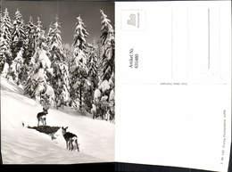 631480,Foto Ak Reh Rehe Winterlandschaft Wild Tiere - Sonstige