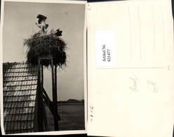 631477,Foto Ak Storchennest Auf Haus Storch Störche Rust 1936 Tiere - Tierwelt & Fauna