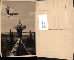 631476,Storchennest Auf Haus Storch Störche Tiere - Tierwelt & Fauna