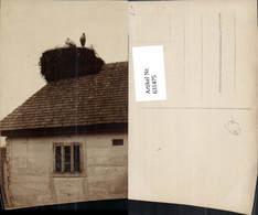 631475,Foto Ak Storchennest Auf Haus Storch Störche Tiere - Tierwelt & Fauna