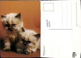631472,Katzen Katzenkinder Tiere - Katzen