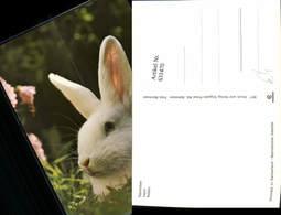 631470,Kaninchen Lapin Rabbit Hasen Tiere - Tierwelt & Fauna