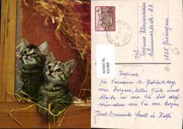 631469,Katzen Katzenkinder I. Stroh Tiere - Katzen