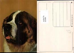 631468,Hund Berner Sennenhund Tiere - Hunde