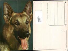 631466,Hund Schäferhund Tiere - Hunde