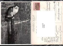 631465,Katze Auf Stamm Sitzend Ich Bin So Einsam Tiere - Katzen