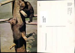 631464,Bern Berne Bärengraben Bären Switzerland Tiere - Bären