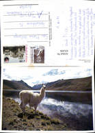 631456,La Llama Bolivien Tiere - Tierwelt & Fauna
