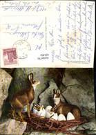 631454,Gemsennest Gämse Tiere Humor 1. April - Tierwelt & Fauna