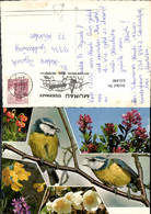 631448,Mehrbild Ak Blaumeise Vögel Blumen Tiere Stempel Murau Steiermark - Vögel