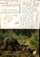 631447,Tiere In Feld U. Wald Wildschwein M. Ferkel Jagd Tiere - Schweine