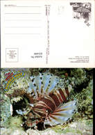 631444,The Great Barrier Reef Butterfly Cod Brachirus Zebra Fisch Tiere - Tierwelt & Fauna