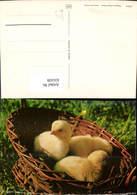 631439,Küken I. Nest Tiere - Tierwelt & Fauna