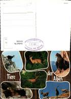 631436,Mehrbild Ak Tiere Der Alpen Murmeltier Adler Hirsch Gämse Tiere - Tierwelt & Fauna