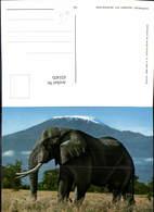 631435,Elephant Against Mt. Kilimanjaro Elefant Tiere - Tierwelt & Fauna