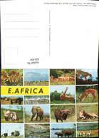 631434,Mehrbild Ak E. Africa Löwen Zebra Elefant Mombasa Kenya Tiere - Tierwelt & Fauna
