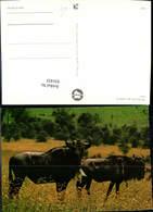 631433,Wildlife Of Kenya Gnu Tiere - Tierwelt & Fauna