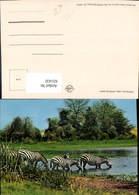 631432,Zebras By Lake Drinking Water Zebra Mombasa Tiere - Tierwelt & Fauna