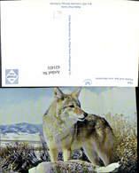 631431,Coyote And San Juan Mountains Kojote Tiere - Tierwelt & Fauna