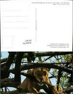 631427,Lion Löwe Mombasa Kenya Tiere - Löwen