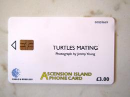 ASCENSION ISLAND  TURTLES TORTUES - Ascension (Ile De L')