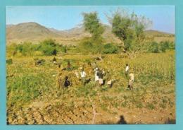 YEMEN A VIEW OF WHEET HARVESTTHE FOG VALLEY TAIZ - Yemen