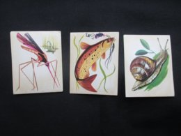 LOT 3 FIGURINES PANINI (M1914) ANIMAUX (2 Vues) Moustique, Escargot, Poisson-Chat - Trading Cards