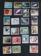 LOT 33 FIGURINES PANINI (M1914) LE MONDE DES ANIMAUX (2 Vues) - Trading Cards