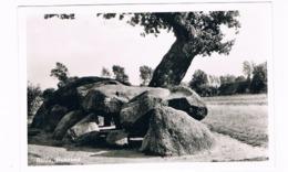 HUN-20   ROLDE : Hunebed ( Menhir, Dolmen) - Dolmen & Menhirs