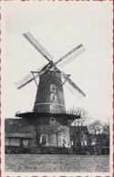Sint-Pauwels Windmolen Roomanmolen St. Sint Gillis Waas Waasland Moulin A Vent Windmill (In Zeer Goede Staat) - Sint-Gillis-Waas