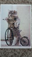 CPM CHAT CHATON EN VELO MINIATURE D AUTREFOIS BICYCLE BERNARD BOISSON ED CARTES D ART  SERIE CHATS 82 BB 6 - Gatti