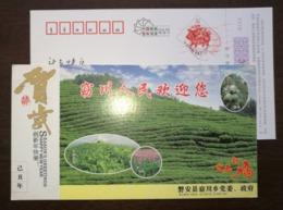 Greenhouse Vegetable,Pueraria Paeonin Flower,tea Garden,Chinese Torreya,CN09 Pan'an New Year Greeting Pre-stamped Card - Medicinal Plants