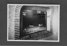 OOSTENDE : -1955- -GEEN POSTKAART-MAAR MOEDERFOTO VAN 16CM OP 11,30 CM-MAISON ERN,THILL - Oostende