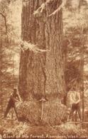 Logging Giant Of The Forest Aberdeen Washington 1910c Postcard - Etats-Unis