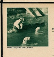Carte Illustrée Neuve N° 193 - 012 C -- BASEL Zoologischer Garten, Eisbären (ours Polaire)   (Zumstein 2009) - Entiers Postaux