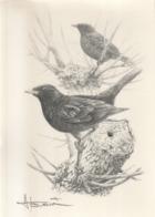 BUZIN / DESSIN A4 SIGNE / MERLE NOIR - 1985-.. Birds (Buzin)