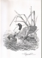BUZIN / DESSIN A4 SIGNE / SERIE 'LE NOUVEAU ZWIN' / TADORNE DE BELON - 1985-.. Birds (Buzin)