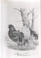 BUZIN / DESSIN A4 SIGNE / SERIE 'LES HAUTES FAGNES' / TETRAS LYRE - 1985-.. Birds (Buzin)