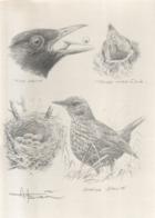 BUZIN / ETUDE A4 SIGNEE / MERLE NOIR - 1985-.. Birds (Buzin)