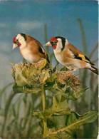 Animaux - Oiseaux - Chardonnerets - Voir Scans Recto-Verso - Pájaros