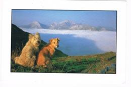 Chiens - 2 Dogs- Hunden - Honden - Honden
