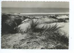 Dunes Près Du Touquet  Plages De La Manche Photo D. Faugouin - Le Touquet