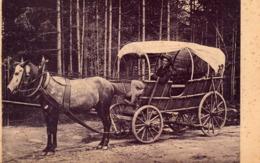 ZAKOPANE Furka Goralska - Chariot, Cheval - Pologne