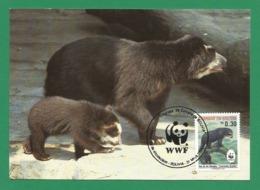 Bolivien / Bolivia 1991 , Spectacled Bear / Der Brillenbär - WWF Official Maximum Card  31 Mayo 1991 - Bolivia