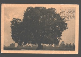 Baisy / Envir. De Genappe - Arbre Ste-Anne De L'an 1651 - Carte Vernie - Genappe