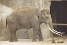 IMAGE - éléphant - Vieux Papiers