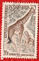 CAMERUN - 1962 - GIRAFFA - USATO - Cameroun (1960-...)